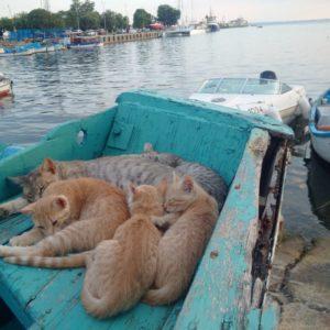 котята в лодке